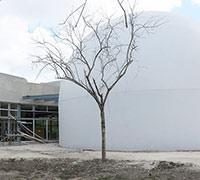 Image of Planetario de Cozumel
