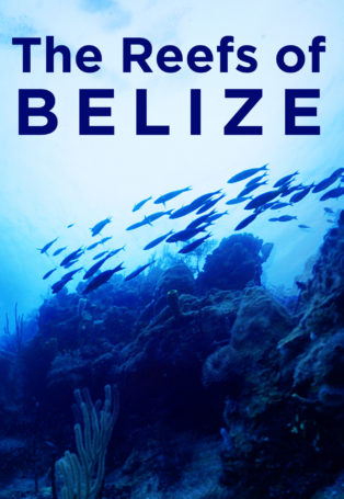 img poster fulldome show The Reefs of Belize