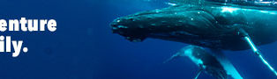 img poster fulldome show Whale Super Highway